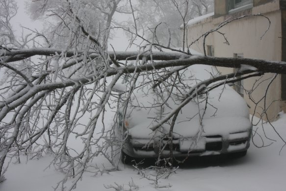 Tree fell on my car.